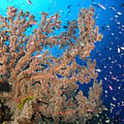 Reef Scene With Sea Fan, Papua New Poster
