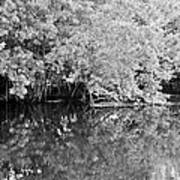 Reflections On The North Fork River In Black And White Poster