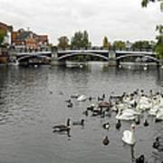 River Thames At Windsor Poster