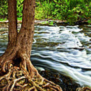 River Through Woods Poster