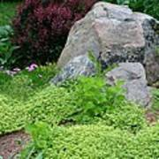 Rock Garden Poster