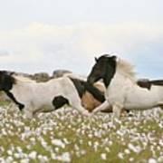 Running Horses Poster by Gigja Einarsdottir