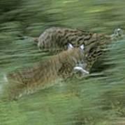 Running Lynx Poster