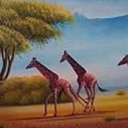 Running Zebras Poster