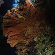 Sea Fans, Fiji Poster
