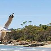 Seagull Spreads Its Wings On The Beach Poster
