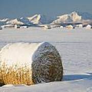 Snow-covered Hay Bales Okotoks Poster