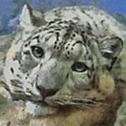 Snow Leopard Painterly Poster