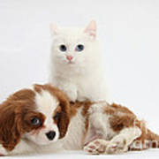 Spaniel Puppy And Kitten Poster