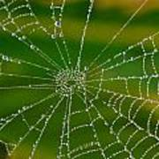 Spiderweb With Dew Drops Poster