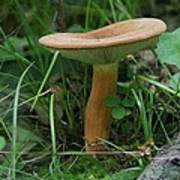 Spring Mushroom Poster