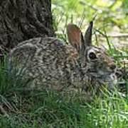 Spring Time Rabbit Poster