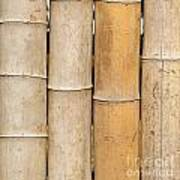 Straight Bamboo Poles Poster
