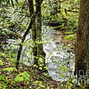Stream Monongahela National Forest Poster