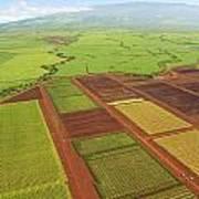 Sugar Cane Fields Poster