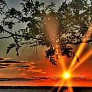 Summers Breeze Sunsets Through Tress Poster