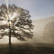 Sunrise In Cades Cove Poster