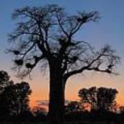 Sunset Baobab Poster