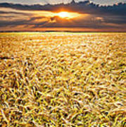 Sunset Wheat Poster