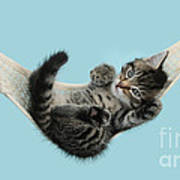 Tabby Kitten In Hammock Poster