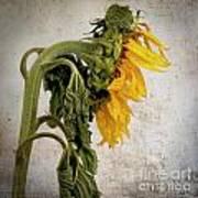 Textured Sunflower Poster by Bernard Jaubert