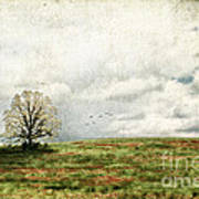 The Lone Tree Poster