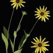 Three Yellow Flowers Poster