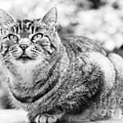 Tomcat Poster by Frank Tschakert