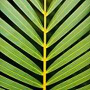 Tropical Palm Frond Poster
