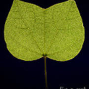 Two Lobed Leaf Poster