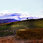 Wine Vineyard In Sicily Poster