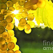 Yellow Grapes Poster