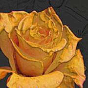 Yellow Rose Art Poster