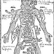 Zodiac Man, Medical Astrology Poster by Science Source