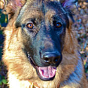 10-month-old Shepherd 2 Poster