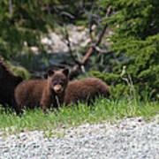 Black Bear Family Poster