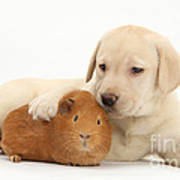 Puppy And Guinea Pig Poster by Mark Taylor