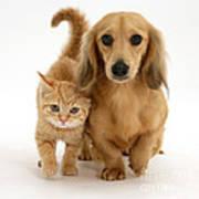 Kitten And Puppy Poster by Jane Burton