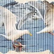 Seagulls Poster by Debra  Miller