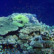 Underwater Landscape Poster