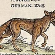 1560 Gesner European Wolf Canis Lupus Poster