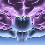 Human Brain, Computer Artwork Poster