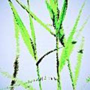 Water Reed Digital Art Poster