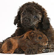 Puppy And Guinea Pig Poster