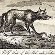1778 Falkland Islands Wolf Fox Extinct Poster