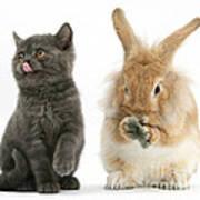 Kitten And Rabbit Poster