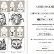 1874 Frontis Haeckel Anthropogenie Poster