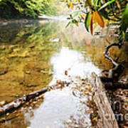 Fall Along Williams River Poster