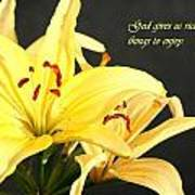 1st Timothy Flower Poster