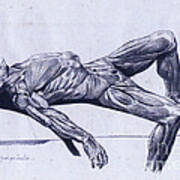 A Flayed Cadaver Poster